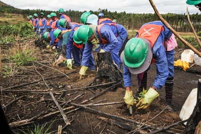 Vuka Timbers - Treated Wooden Poles Workers in the Field