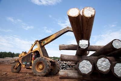 Vuka Timbers - Treated Wooden Poles Tipper Truck