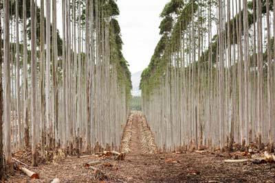 Vuka Timbers - Treated Wooden Poles Chopped Woods
